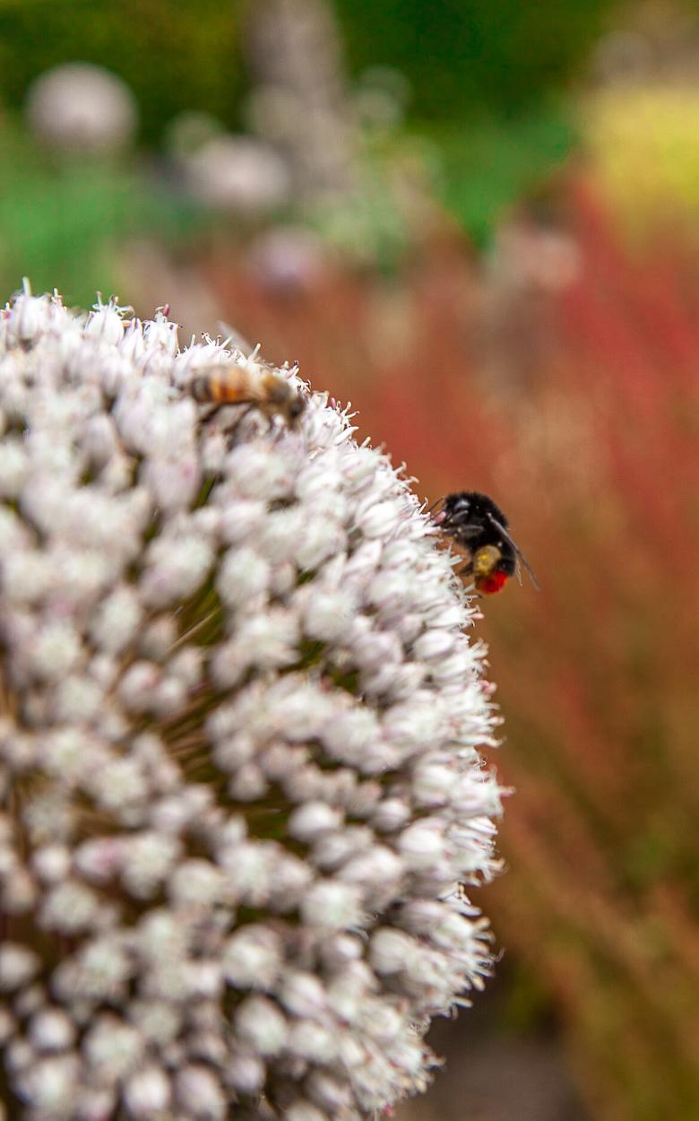Bloem en insecten Muiderslot tuinen